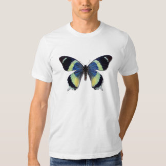 Laglaizei de Papilio Camisas