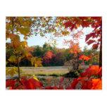 Lago autumn enmarcado postal
