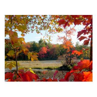 Lago autumn enmarcado tarjetas postales