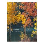 Lago bear en otoño postales