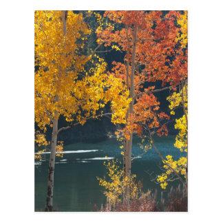 Lago beaver (lagos Mesa) en otoño Tarjeta Postal