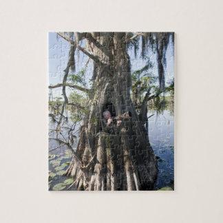 Lago Caddo, cazando persianas Puzzle Con Fotos