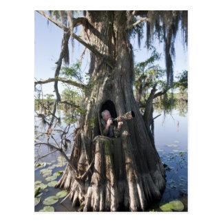 Lago Caddo, cazando persianas Tarjetas Postales