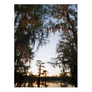 Lago Caddo en la salida del sol Postal