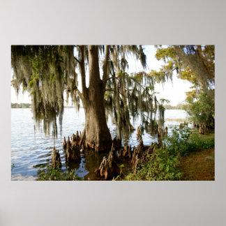 Lago cypress poster