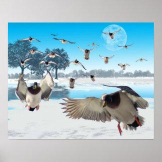 Lago duck posters