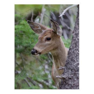 Lago Fishercap del retrato de los ciervos de la Postal