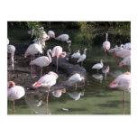 Lago flamingo tarjeta postal