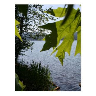 Lago grove de la cabaña en verano tarjetas postales