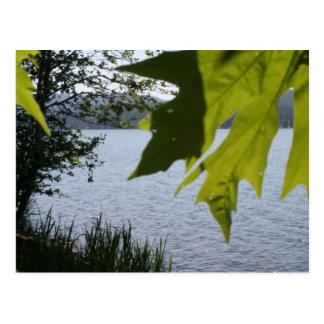 Lago grove de la cabaña en verano postales