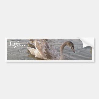 Lago joven swans etiqueta de parachoque