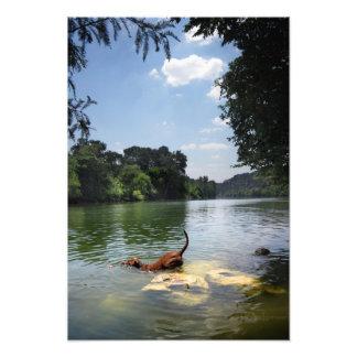 Lago ladybird de la natación del perro - Austin cé Fotografías
