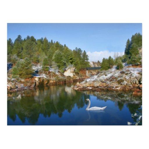 Lago mountain, cisne, postal de las reflexiones