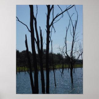 Lago muerto Truman de los árboles Póster