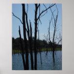 Lago muerto Truman de los árboles Posters