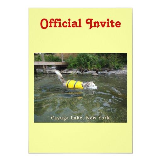 Lago NY Cayuga de la natación del perro Invitaciones Personales