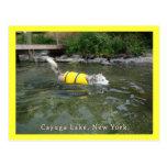 Lago NY Cayuga de la natación del perro Postal