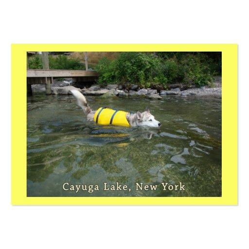 Lago NY Cayuga de la natación del perro Plantilla De Tarjeta De Visita