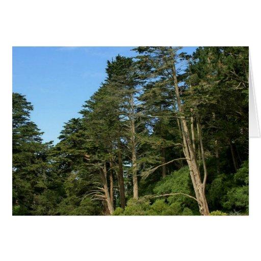 Lago stow en San Franciscos Golden Gate Park Tarjeta De Felicitación