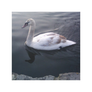 Lago swan impresión en lienzo