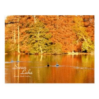 Lago swan, SC de Sumter Tarjeta Postal