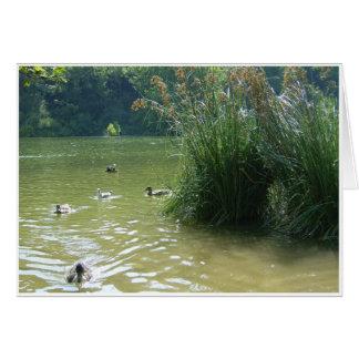Lago Swanbourne Tarjeta