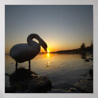 Lago y el cisne posters