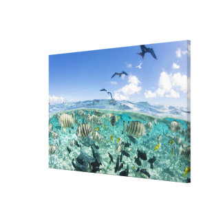 Lagoon safari trip featuring Stingrays Canvas Print