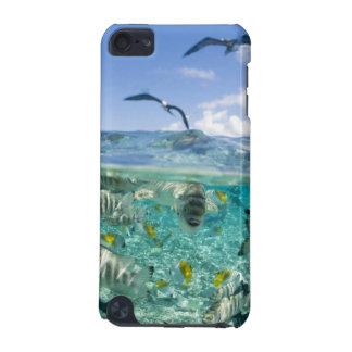 Lagoon safari trip featuring Stingrays iPod Touch 5G Cases