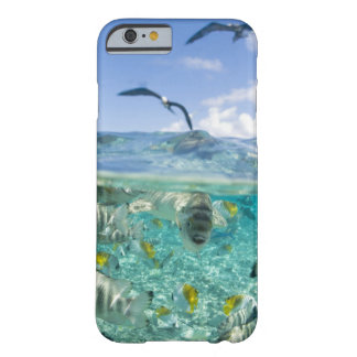 Lagoon safari trip featuring Stingrays Barely There iPhone 6 Case