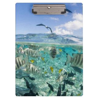Lagoon safari trip featuring Stingrays Clipboards