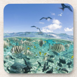 Lagoon safari trip featuring Stingrays Coaster