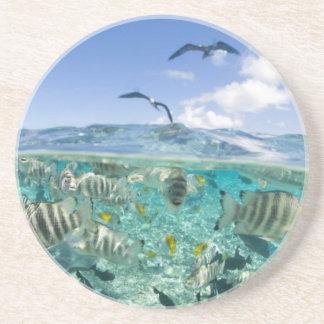 Lagoon safari trip featuring Stingrays Drink Coaster