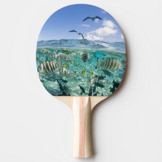 Lagoon safari trip featuring Stingrays Ping Pong Paddle