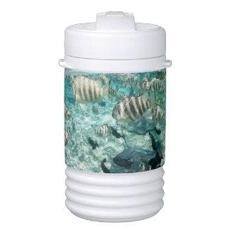 Lagoon safari trip featuring Stingrays Igloo Beverage Cooler