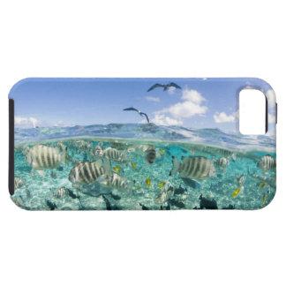 Lagoon safari trip featuring Stingrays iPhone 5 Cases