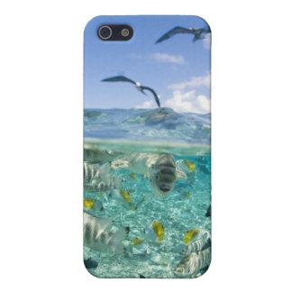 Lagoon safari trip featuring Stingrays iPhone 5 Cover