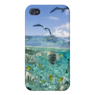 Lagoon safari trip featuring Stingrays iPhone 4 Cases