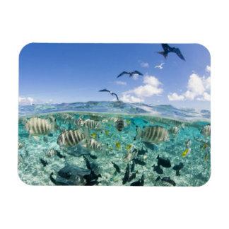 Lagoon safari trip featuring Stingrays Magnet