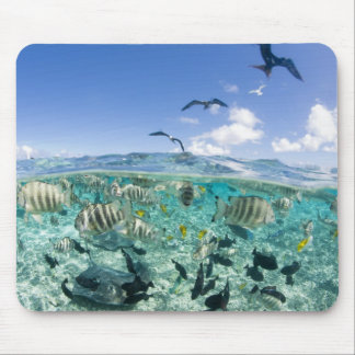 Lagoon safari trip featuring Stingrays Mousepad