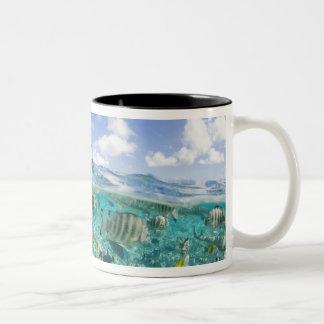 Lagoon safari trip featuring Stingrays Two-Tone Coffee Mug
