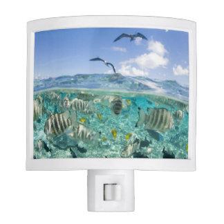 Lagoon safari trip featuring Stingrays Night Light