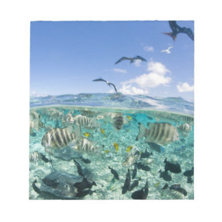 Lagoon safari trip featuring Stingrays Note Pad