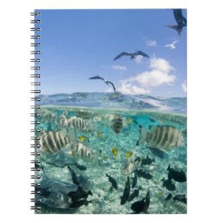 Lagoon safari trip featuring Stingrays Spiral Notebook