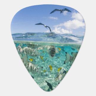Lagoon safari trip featuring Stingrays Pick