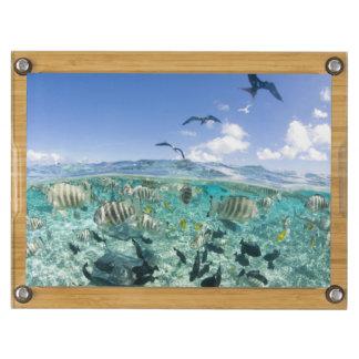 Lagoon safari trip featuring Stingrays Rectangular Cheese Board