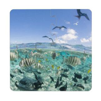 Lagoon safari trip featuring Stingrays Puzzle Coaster