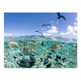 Lagoon safari trip featuring Stingrays Postcard