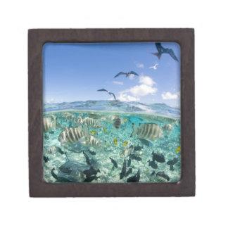 Lagoon safari trip featuring Stingrays Premium Trinket Boxes