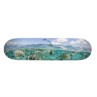 Lagoon safari trip featuring Stingrays Skateboard Deck